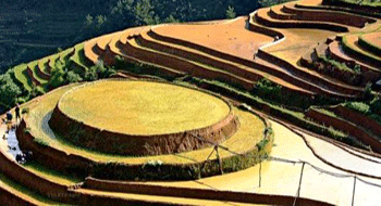 Mu Cang Chai in watering season