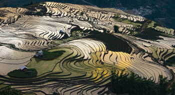 Sapa in Vietnam - Rice terraces at the time of watering