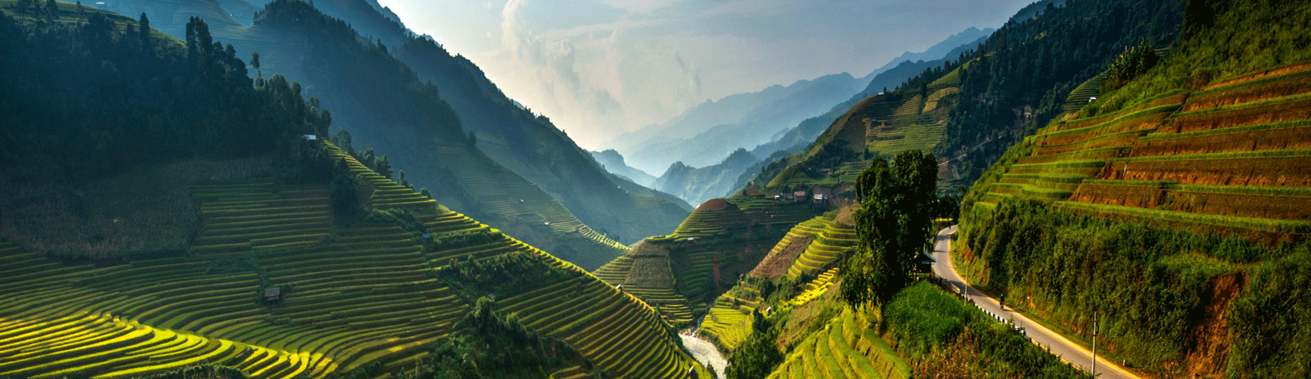 Rice fields in terraces in Vietnam